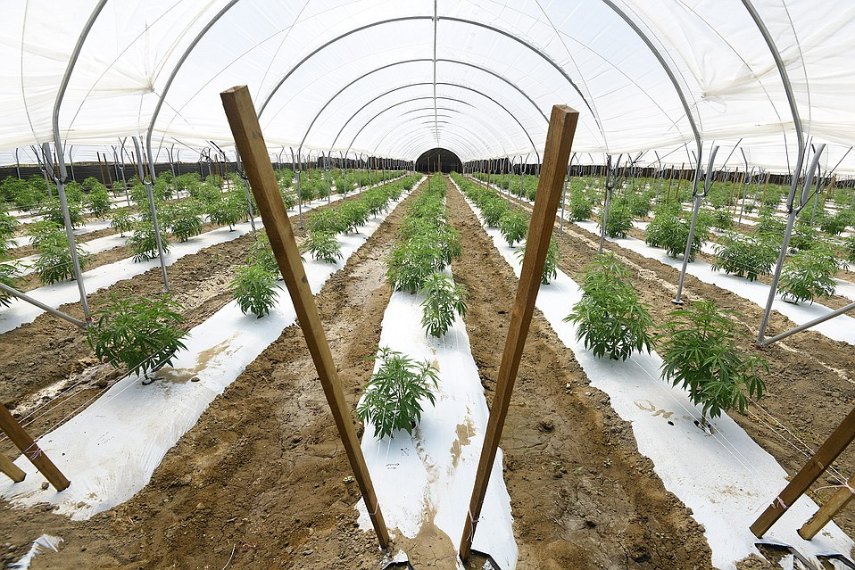 Carpinteria marijuana cultivation facility