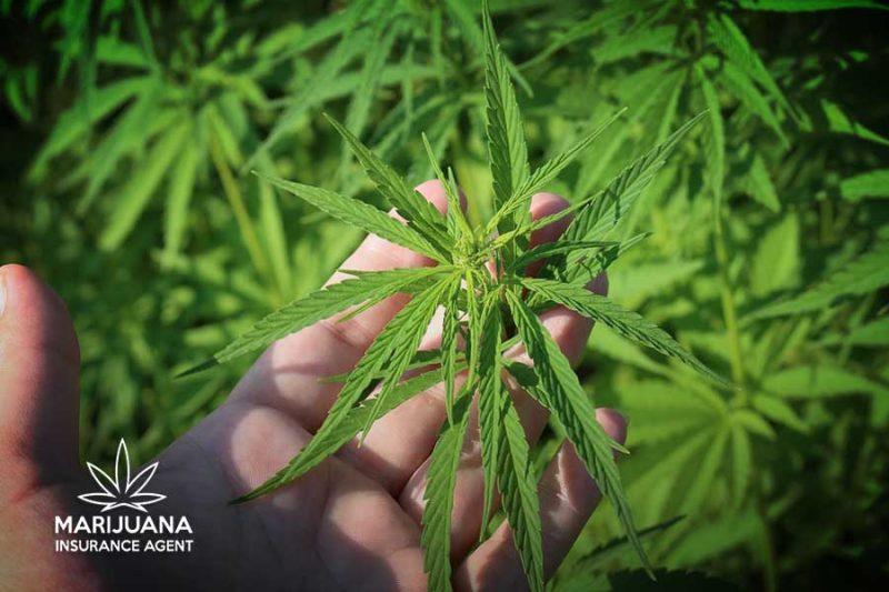 crop-insurance-farm-bill
