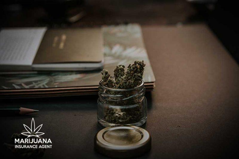 marijuana businesses need cannabis insurance options