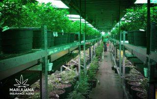 bill increase insurance coverage marijuana businesses