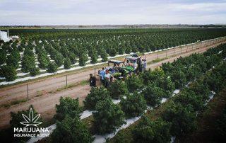 los suenos farms loses millions early frost