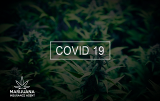 covid 19 impact cannabis industry